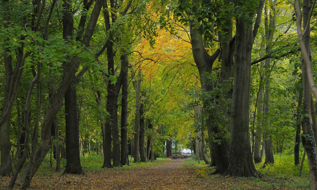 Entretien parcs et jardins asthor for Entretien parc et jardin tarif