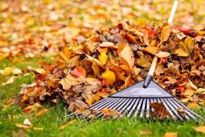 ramassage feuilles mortes